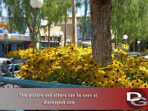 The flowers in the Sun Plaza are in bloom... fall (well end of summer) in Southern California